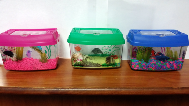 Make your own aquarium craft station company picnic school for Create your own fish